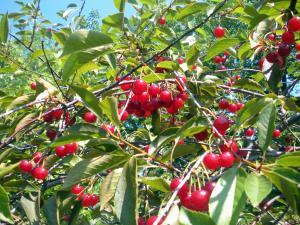 Falcon Orchard